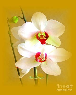 White Orchids Art Print by Doris Wood