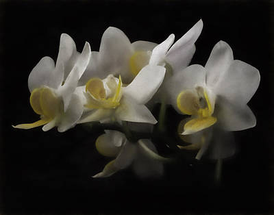 Photograph - White Orchids by Eduard Moldoveanu