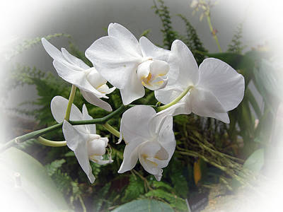 Digital Art - White Orchids II  by Don Wright