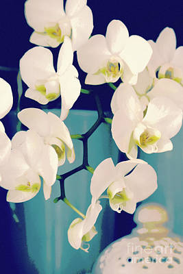 White Orchids In Turquoise Vase Art Print by Carol Groenen