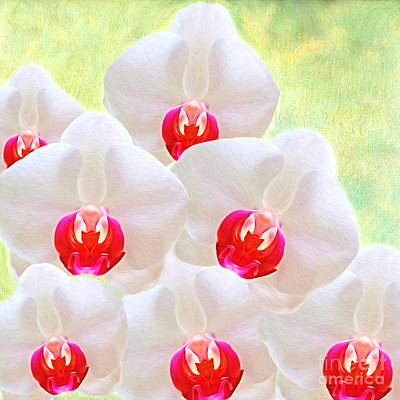 White Orchid Photograph - White Orchids by Laura D Young