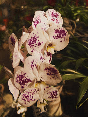 Photograph - White Orchids by Mick Burkey