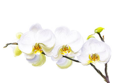 White Orchids Art Print