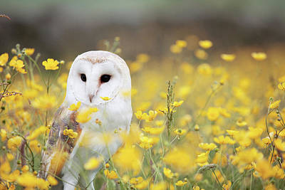 Yellow Flower Photograph - White Owl by Happy Home Artistry
