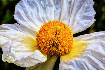 Center Glow Photograph - White Paeonia Japonica Flower by Garry Gay