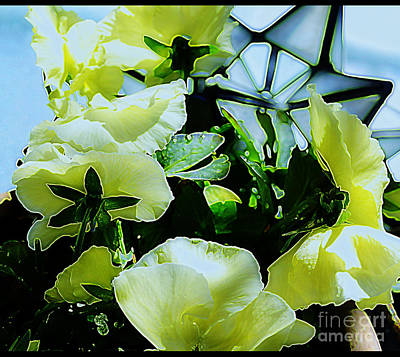 Photograph - White Pansies  by Diane montana Jansson