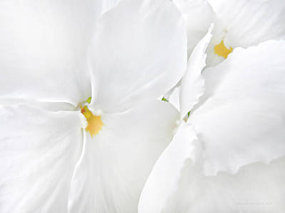 Photograph - White Pansy Flowers by Jennie Marie Schell