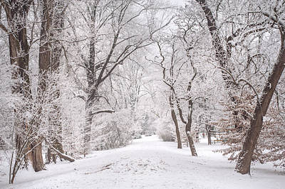 Photograph - White Path To Winter Dream by Jenny Rainbow