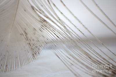 Photograph - White Peacock Macro Photographic Art by Ella Kaye Dickey