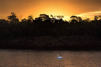 Wall Art - Photograph - White Pelican Alone In The Sunrise by Martin Belan