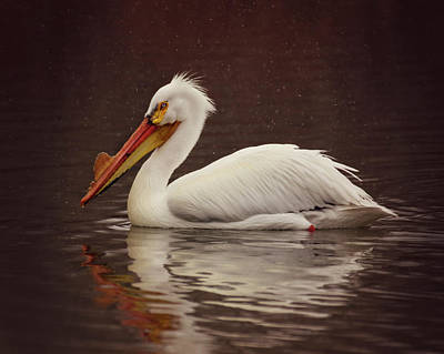 Photograph - White Pelican by Erica Kinsella