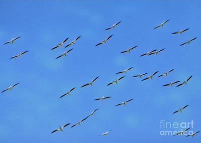 Digital Art - White Pelican Fly Over by Patrick M Lynch