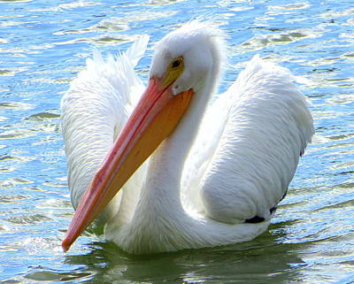 Photograph - White Pelican Profile 2 1142017 by Mark Lemmon