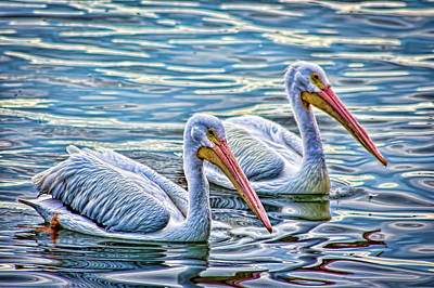 Photograph - White Pelicans 2 by Richard Goldman