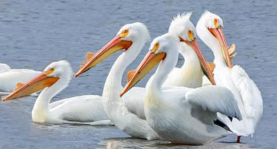 Photograph - White Pelicans At Nelson Lake by Joni Eskridge