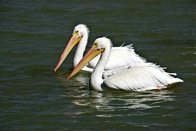 White Pelicans Art Print by Rodney Cammauf