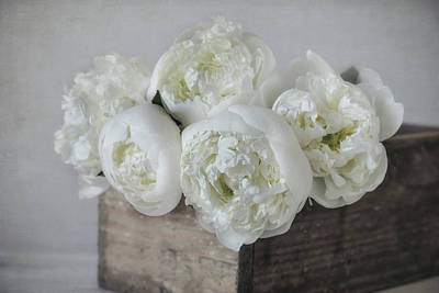 Photograph - White Peonies by Kim Hojnacki