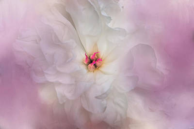 Photograph - White Peony 4 by Jai Johnson