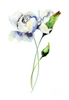 Painting - White Peony Flowers by Regina Jershova