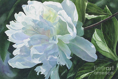 White Peony Art Print by Sharon Freeman
