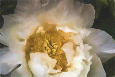 Digital Art - White Peony by Teresa Wilson