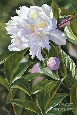 Peonies Painting - White Peony With Bud by Sharon Freeman