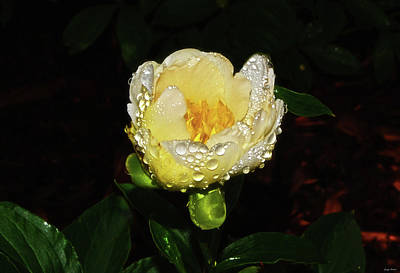 Photograph - White Peony With Raindrops 003 by George Bostian