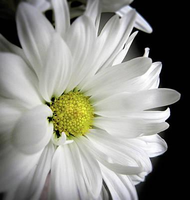 White Petals Art Print by Julie Palencia