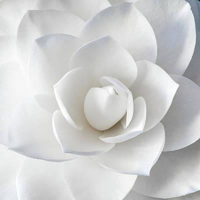 Photograph - White Petals by Paul Johnson