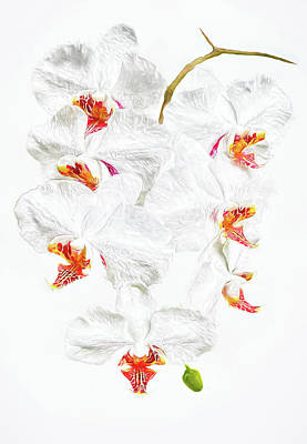 Digital Photograph - White Phalaenopsis Orchid by Marcia Colelli