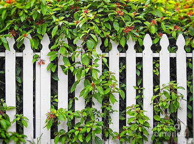 Photograph - White Pickett Fence by Ella Kaye Dickey