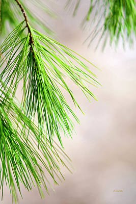 Pine Needles Photograph - White Pine Branch by Christina Rollo