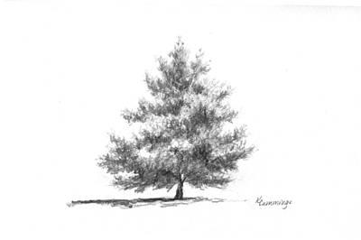 Simplicity Drawing - white Pine by Karen Cummings