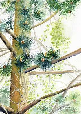 Painting - White Pine Tree by Melly Terpening