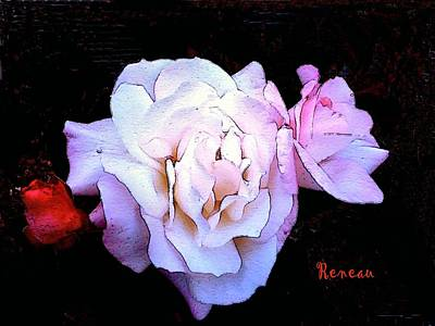 Photograph - White - Pink Roses by Sadie Reneau