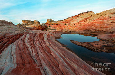 Photograph - White Pocket Oasis by Mike Dawson