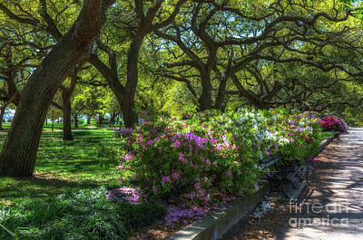 Photograph - White Point Garden In The Spring by Dale Powell