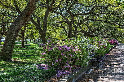 Photograph - White Point Garden Spring Stroll by Dale Powell