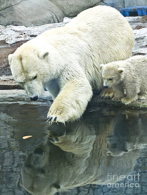 Painting - White Polar Bear With Baby by Irina Afonskaya