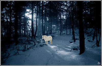 Photograph - Spirit Pony In A Blue Wood by Wayne King