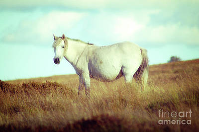 Photograph - White Pony On The Moor by Toula Mavridou-Messer