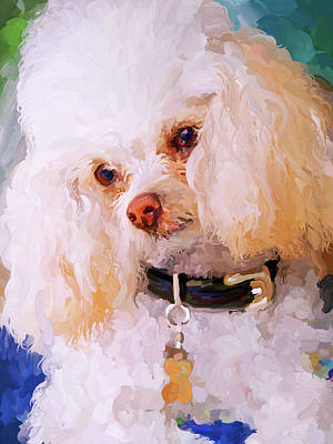 Painting - White Poodle by Jai Johnson