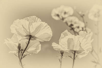 Photograph - White Poppies In Sepia by Clare Bambers
