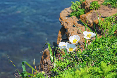 Surrealism Royalty Free Images - White poppies on a rock by the sea Royalty-Free Image by Mariia Kalinichenko