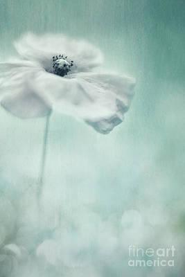 Photograph - White Poppy by Priska Wettstein