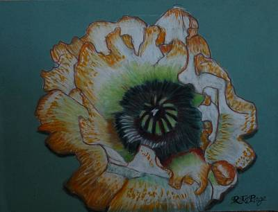 Pastel - White Poppy by Richard Le Page