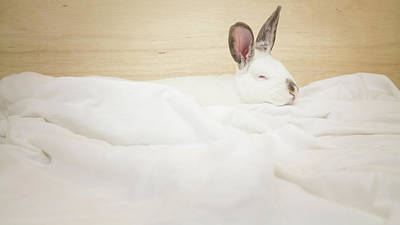 Photograph - White Rabbit Sleeping by Jeanette Fellows