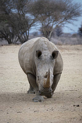 Photograph - White Rhino 2 by Ernie Echols