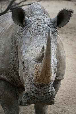 Photograph - White Rhino 4 by Ernie Echols