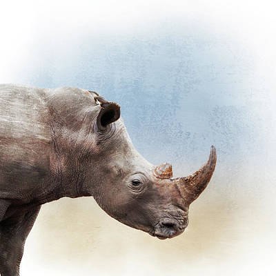Photograph - White Rhino Closeup Square by Susan Schmitz